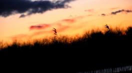 Alene i vinden