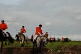 Heste Aktion
